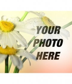 Photo collage with an image of daisy flowers with an orange background where you can place a photo and download free