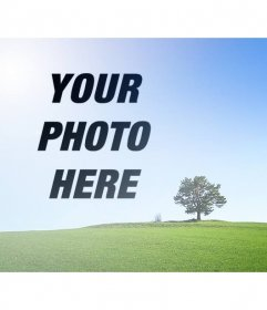 Collage with a photo of a landscape with a green field and blue sky to put a picture next to a tree