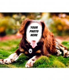 Put your face on a dog posing with this online photomontage