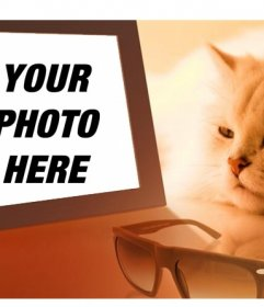 Photomontage of a bored cat seeing your photo in which you put the image you want