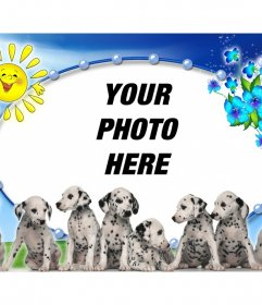 Photomontage with Dalmatian puppies and photo background