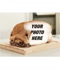 Bread shaped dog with to put your photographs over the skin