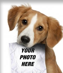 Photomontage with sad puppy dog looking for his owner who has a role in the mouth where you can upload a photo