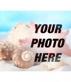 Photomontage to make a collage with sea shells and conch shells in the sand on the beach on a photo of you