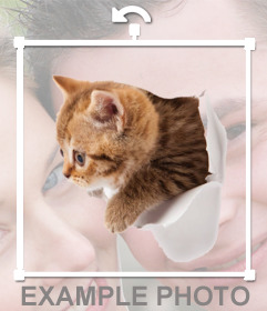 Sticker of a kitten with effect that is coming out of your photo
