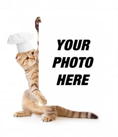 Photomontage with a cat dressed as a chef holding your picture