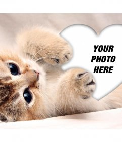Cute photo effect of a kitten hugging a heart to add your photo