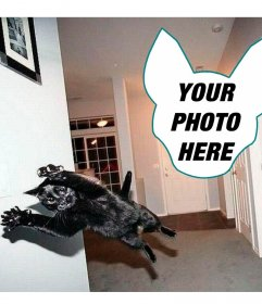 Photomontage with a cat jumping as if it were an explosion