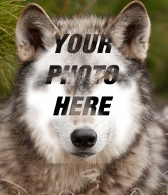 Put your face on a wolf with this photo effect