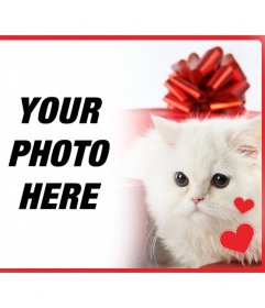 Romantic postcard with white persian kitten with hearts in front of a gift box and the photo you upload online