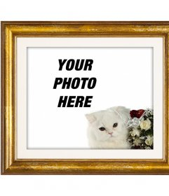 Gold photo frame with a white Persian cat and red and white roses to put your love photo with your boyfriend or girlfriend