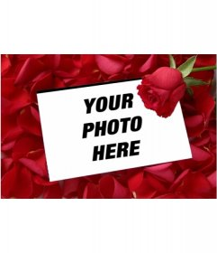 """Put a picture in a love letter with a rose petal pink background. To complement the Valentine""""s gift, a card that you can print or email. Loving detail a memory to last the distance"""