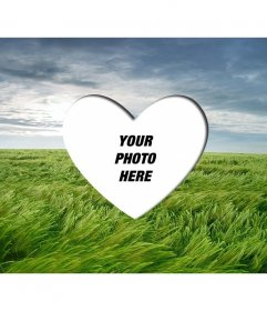 Love photoframe to put a romantic picture heart shaped on a landscape with green wheat field and blue sky