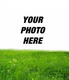 Picture frame for green grass in your photo