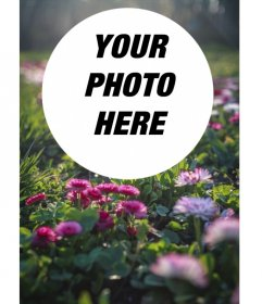 Field of flowers and grass in the sun with a circular frame for your photos