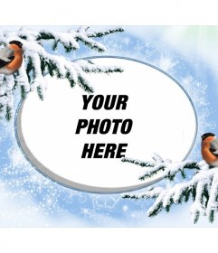 Snowy photo frame for personalize with two birdies