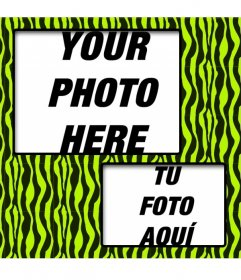 Create a collage with green and yellow zebra patterned and two photos online