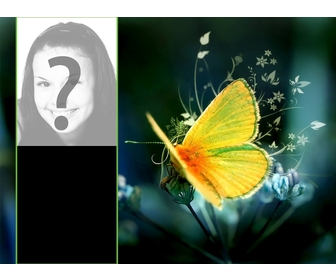 Wallpaper for two photos with a yellow butterfly perched on a flower