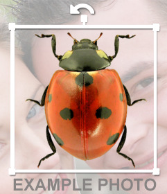 Photomontage to put a ladybug in your photos