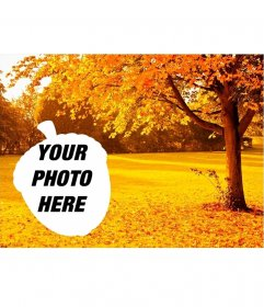 Golden autumn trees and an acorn shaped photo frame