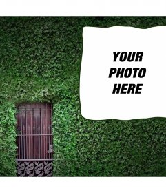 Photomontage to put your photo on an ivy