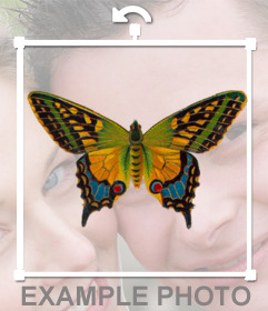 Decorate your photos with this colorful butterfly