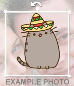 Decorate your photos with a fat kitty with a mariachi hat