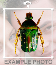 Sticker with a green beetle to put in your photographs