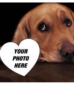 Photo effect of love with a tender dog to add your photo inside a heart
