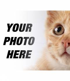 Add this blond kitty to your photos and customize them with text free and online
