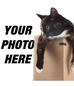 Photomontage to put a kitty in a box in one of your pictures