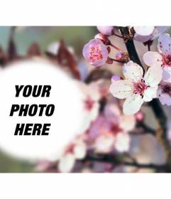 Photomontage on a blurred background with cherry blossoms and a rounded semitransparent photoframe  to place your photo