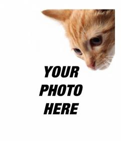 Add a kitten to your photos and also also to customize them easily