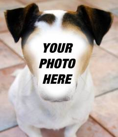 Photomontage of a dog where you can place your face and for free