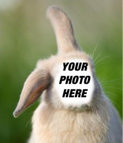 Online photomontage with your face on the body of a rabbit