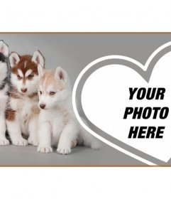 Customize your Facebook profile with a cover full of husky puppy and your photo