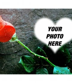 Put a photo inside a heart with a rose next, with this love photo effect that you can send as a postcard