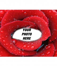 Photomontage with enclosed photo inside a fresh rose