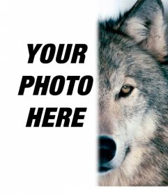 Photomontage to put a wolf face beside you, completing your half