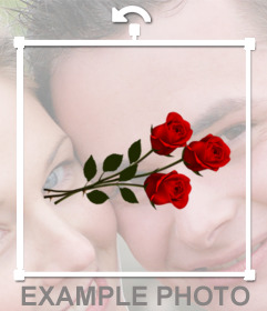 Beautiful red roses to decorate your pictures