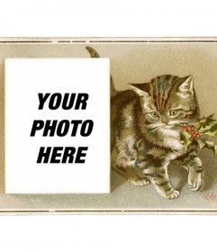 Christmas card with vintage brown cat drawn with a holly in the mouth and a box in which to place a photograph